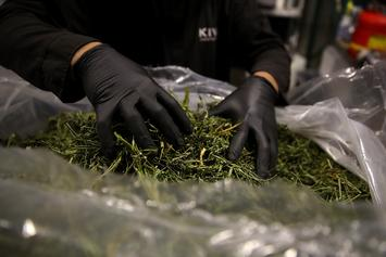 The Cannabis Industry Racked Up $1.2 Billion in January